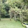 秋ですねぇ。黄葉した葉っぱが、ハラハラと・・・