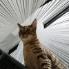 新築なんて猫には関係ない! うちの猫が変な遊びを覚えた!