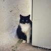 お行儀よく見つめてくるミコノス島の猫2匹