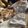 猫の介護【お見舞い編】3匹が集合したよ☆