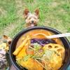 【スープカリーメラ】の鬼うまカレーで愛犬とピクニック