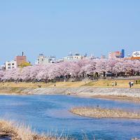 【2020最新版】【3/30更新!】金沢の桜開花情報&お花見オススメスポットその2【金沢市郊外編】