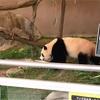 Gotoキャンペーンを利用してパンダに会いに行ってきましたpart.2