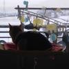 ハンモックから雪景色を一生懸命眺めるココちゃん♪(322日目)