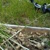 畑のノビル