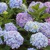 きれいな花を長く楽しむ方法