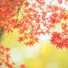 紅葉の葉の名前、言えますか?