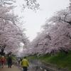 高田千本桜(3月下旬~4月上旬)