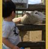 【マザー牧場②】羊と馬にエサやり ハンドガードがあれば噛まれず安心