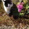 宝寿院、春のお庭