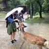 修学旅行 奈良公園