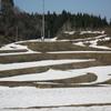 北海道は27℃とか、こちらも22℃で種蒔きしました(yahoo編集版)