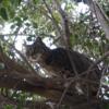 4月前半の #ねこ #cat #猫 その2