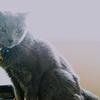 【朝活】逆光写真2 ネコ様を撮る