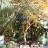 大文字山(現実の滝と幻の滝)〜鹿ヶ谷