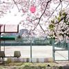 お花見 with GPSアプリ「ジオグラフィカ」