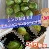 レンジで簡単!芽キャベツのコンソメ煮【ダイエット/低糖質/お弁当/作り置き】