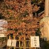 合格の木、見に行くね。尾長天満宮(二葉の里、歴史の散歩道)