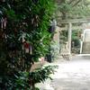 真夏の神社