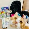 【猫学】猫の防災。おうちに愛猫とのツーショット写真、ありますか?