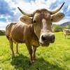 タンザニア大統領「牛でさえ同性愛には不賛成」