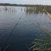 秋の手賀沼水系バス釣り!ひとまずの釣果出ました。