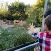 Day 2 in San Diego  We went to San Diego zoo