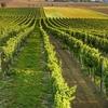 モラヴィアのワイン酒場 (1)