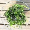 梅雨の倦怠感は緑の野菜とハーブで乗り切る~グリーンデトックス