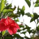 夏旅ブログ 〜 沖縄写真館 〜