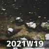 週報 2021W19
