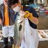 2021年6月15日 小浜漁港 お魚情報