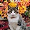 21日まで❗️岩合光昭さんの厳選写真を集めた写真展が玉川高島屋で開催❗️
