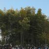 東京から30分の都会の禁足地「八幡の藪知らず」 その異様な風景