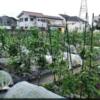 【副業・起業で土地の収益化】市民農園・シェア畑・レンタル畑