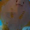 【竹島水族館】めっちゃ小さい水族館だけど満足度高め。バックヤードツアーで裏側にも潜入