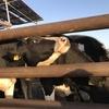 函館牛乳 あいす118