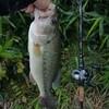バス釣り2019(27)【長梅雨の新利根川釣行】