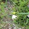 生命力は足下に咲く 庭の植物を愛でる