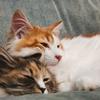 猫の保険は本当に必要?保険の仕組みと猫の病気やけがについてのお話