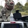 ジル(猫)と暫しの別れ〜寂しいです。゚(゚´ω`゚)゚。