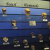 記事転載:indeep「「人類の祖先の出発点は存在しない」:「種の起源」について科学誌ネイチャーに掲載された国際研究は、現世人類の共通の祖先が存在しない可能性に行き着く」