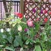 春がいっぱいの庭