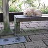 象山登山 ~ 犬 ~ 台北