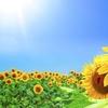 【374日目実績】夏期講習16日目(算国社)~ようやく満点の算数デイチェ~