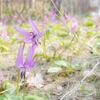 【4月副業まとめ】変化に富んだ4月。富士見ヶ丘公園にも花が咲きました。