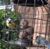 庭に来る鳥たち