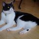 今日の黒猫モモ&白黒猫ナナの動画ー816