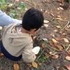 芋掘りの日