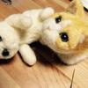 【羊毛フェルト:ニャー助】我が家に猫がやってきた